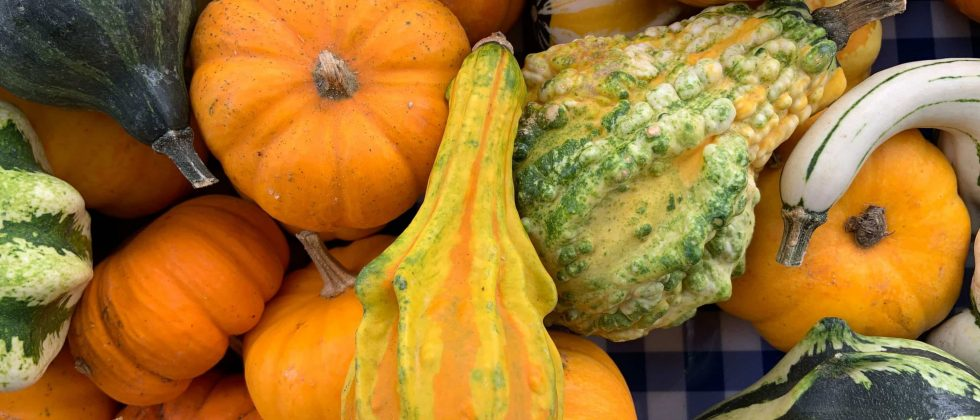 A medley of summer squash