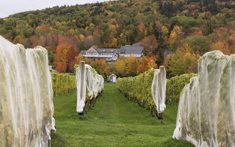 Local winery during fall in Maine
