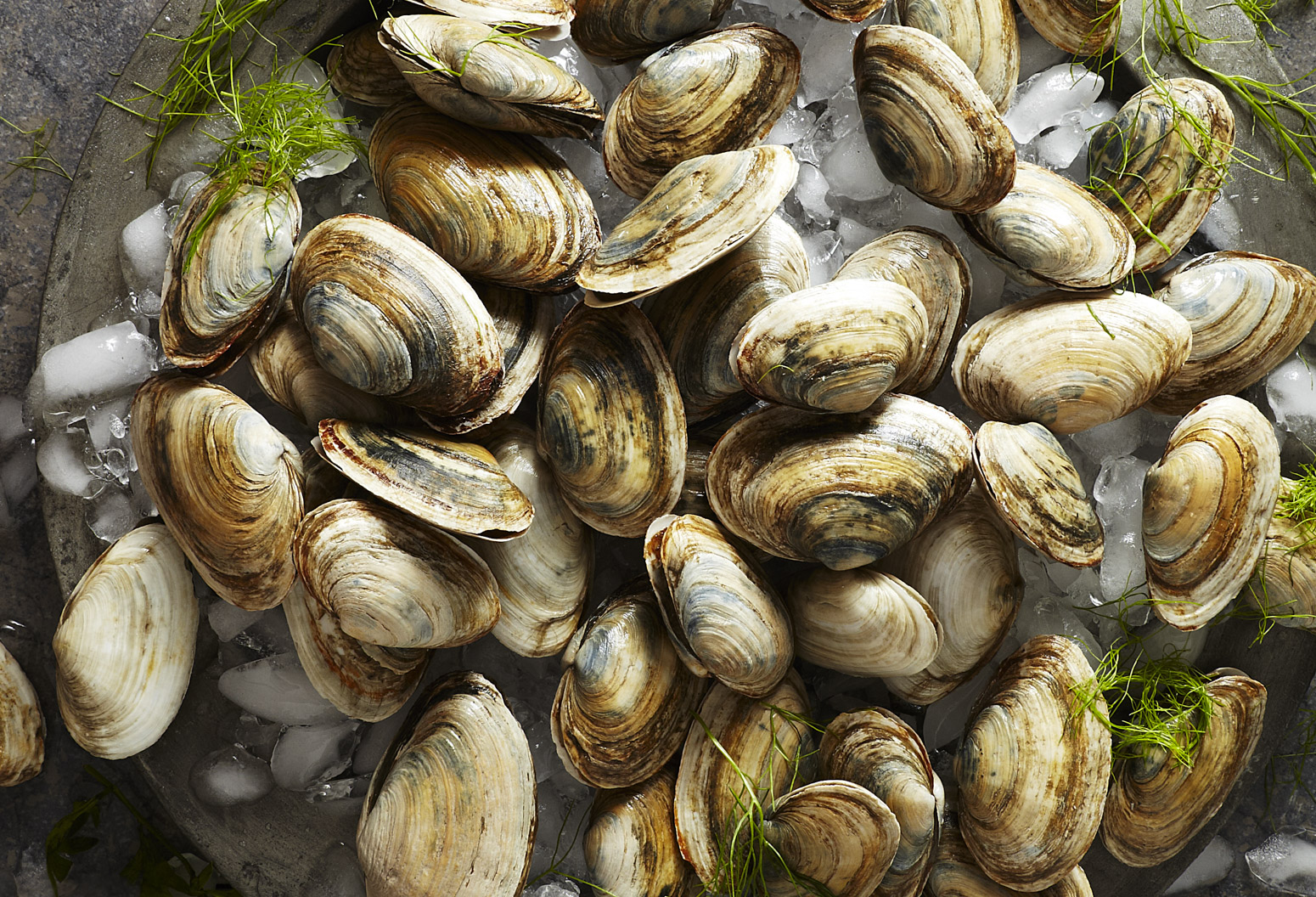 Fresh clams on a silver plate