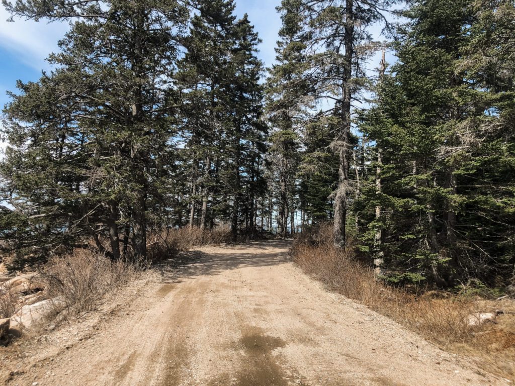 A Schoodic Peninsula road.
